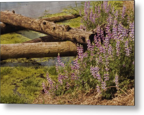 Wetland Metal Print featuring the photograph Wetland Beauty by Bonnie Bruno