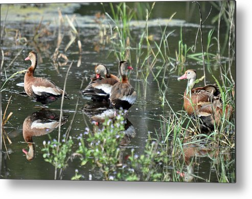 Teresa Blanton Metal Print featuring the photograph Whistler Reflections by Teresa Blanton