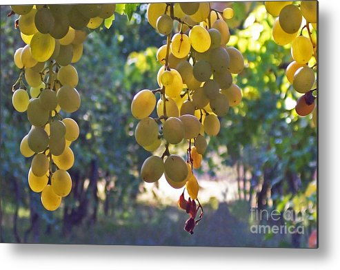Grapes Metal Print featuring the photograph White Grapes by Barbara McMahon