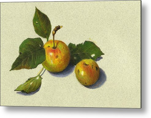 Apples Metal Print featuring the drawing Wild Apples In Color Pencil by Joyce Geleynse