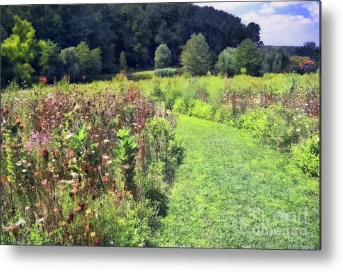 Garden Metal Print featuring the photograph Wildflower Field Afternoon by Susan Isakson