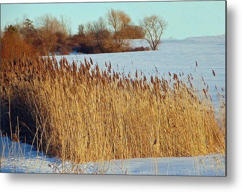 Landscape Metal Print featuring the photograph Winter Breeze by Aimee L Maher Photography and Art Visit ALMGallerydotcom