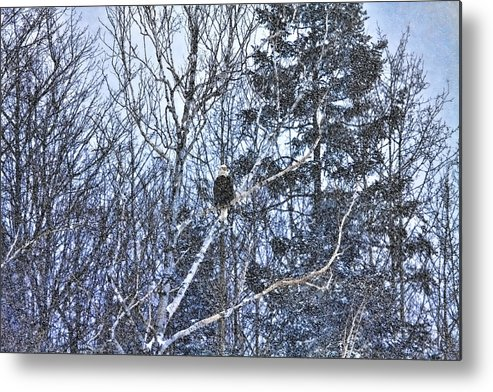 Eagle Metal Print featuring the photograph Winter Storm Alert by Gary Smith