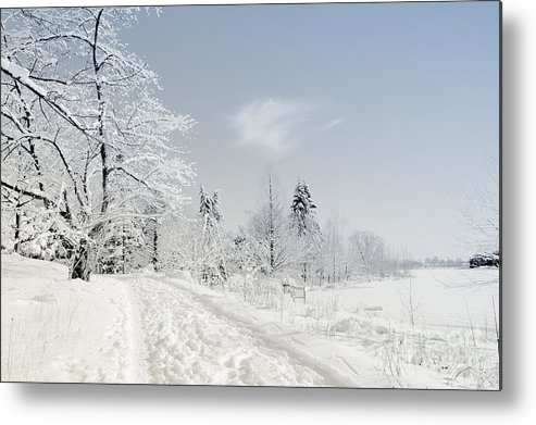 Winter Metal Print featuring the photograph Winters Beauty by Elaine Manley