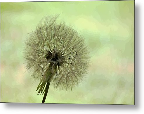 Green Metal Print featuring the photograph Wishing by Joanne Riske