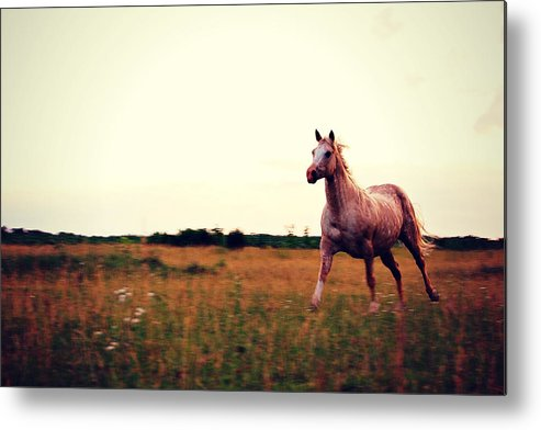 Horse Metal Print featuring the photograph With The Wind by Amy Schauland