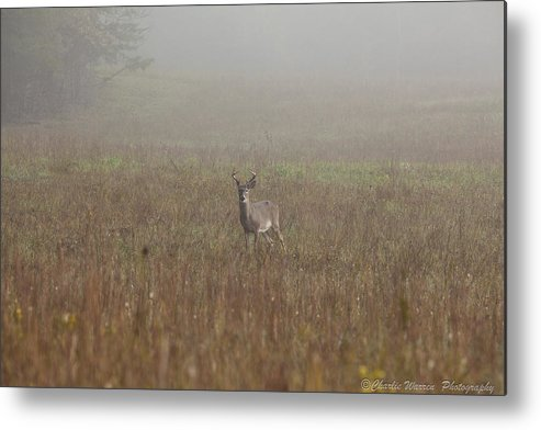 Deer Metal Print featuring the photograph Young Buck by Charles Warren