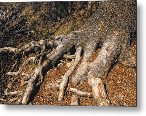 Tree Metal Print featuring the photograph Your Roots Are Showing by Donna Blackhall