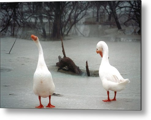 Goose Metal Print featuring the photograph 072506-11 by Mike Davis