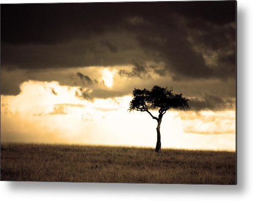Nature Metal Print featuring the photograph 08006 by Jeffrey Freund