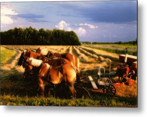 Harvest Metal Print featuring the photograph Amish Hay Rig by Roger Soule
