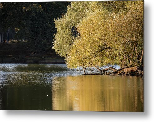 Landscape Metal Print featuring the photograph Beautiful Colorful Landscape Image Of Golden Autumn Fall Trees R by Matthew Gibson