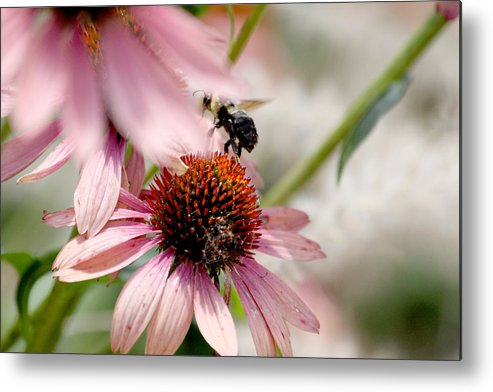Bee Metal Print featuring the photograph Bee Leaving Flower by Lita Kishbaugh