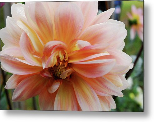 Flower Metal Print featuring the photograph Blooming Flower by Samantha Kimble