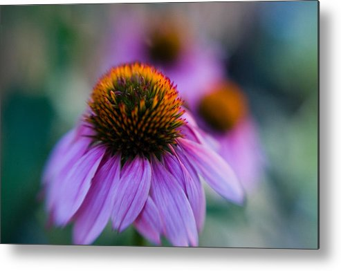 Conflower Metal Print featuring the photograph Coneflower Ballet by Sandy Belk