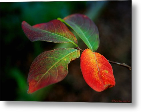 Leaves Metal Print featuring the photograph Fall Leaves by Linda Ebarb