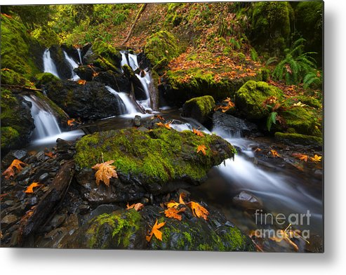 Leaves Metal Print featuring the photograph Fallen Along The Way 2 by Mike Dawson