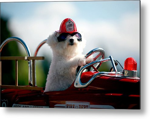 Michael Ledray Metal Print featuring the photograph Fifi The Fire Dog by Michael Ledray