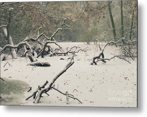 Countryside Metal Print featuring the photograph Frozen Fallen by Andy Smy