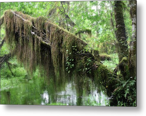 Rainforest Metal Print featuring the photograph Hall Of Mosses - Hoh Rain Forest Olympic National Park Wa Usa by Christine Till