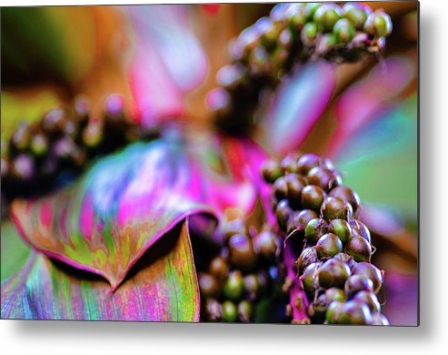 Tropical Metal Print featuring the photograph Hawaii Plants And Flowers by D Davila