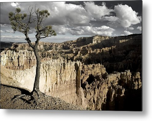 bryce Canyon Metal Print featuring the photograph Lone Tree Canyon by Mike Irwin