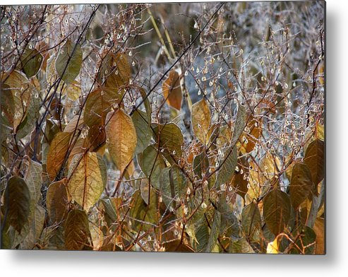 Morning Metal Print featuring the photograph Morning Frozen by JAMART Photography