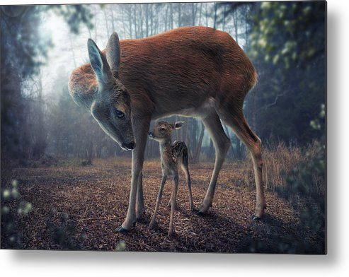 Creative Metal Print featuring the photograph Mother And Fawn by John Wilhelm