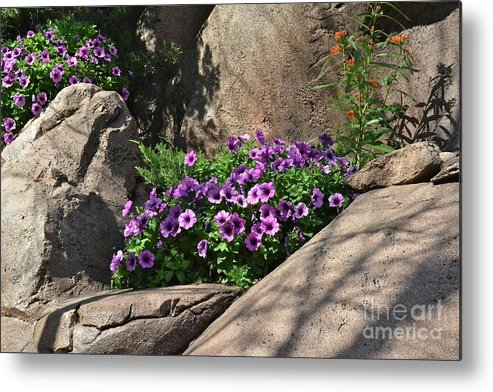 Flowers Metal Print featuring the photograph On The Rocks by Carol Bradley