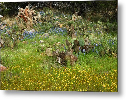Wildflowers Metal Print featuring the photograph Outcropping Of Color by Robert Anschutz
