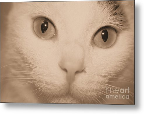 Kitty Metal Print featuring the photograph Pretty Kitty by Denise Jenks