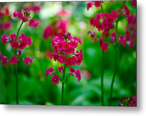 Floral Metal Print featuring the photograph Purple Flowers by Paul Kloschinsky