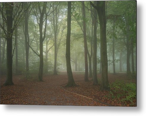 Landscape Metal Print featuring the photograph Stunning Colorful Moody Vibrant Autumn Fall Foggy Forest Landsca by Matthew Gibson