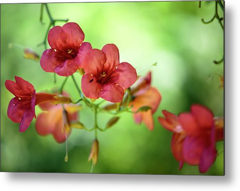 Flower Metal Print featuring the photograph Summer Flowers 1 by Nailia Schwarz