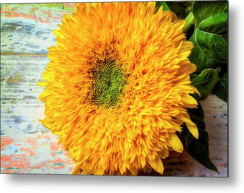 Sunflower Metal Print featuring the photograph Sunflower Study by Garry Gay