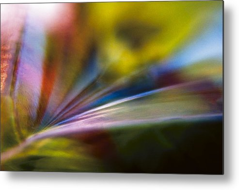 Tarragon Metal Print featuring the photograph Tarragon Tertiary by Shawn Young