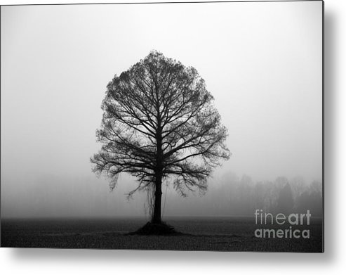 Tree Metal Print featuring the photograph The Tree by Amanda Barcon