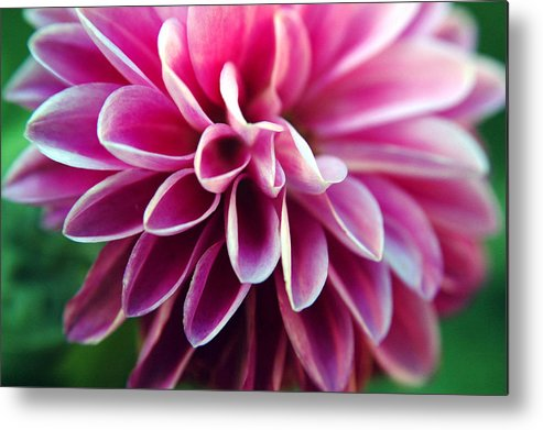 Flower Metal Print featuring the photograph Untitled by Kathy Schumann
