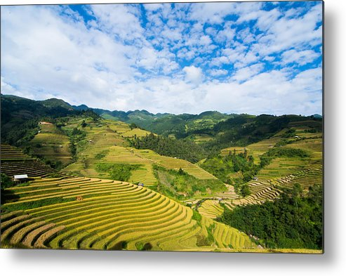 Rice Terraces In Harvest Time Metal Print featuring the photograph Vietnam Rice Terraces by Dong Bui