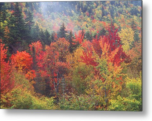 New Hampshire Metal Print featuring the photograph White Mountain Foliage by John Burk