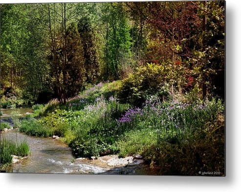 Mountains Metal Print featuring the photograph Wild Flowers by Joseph G Holland