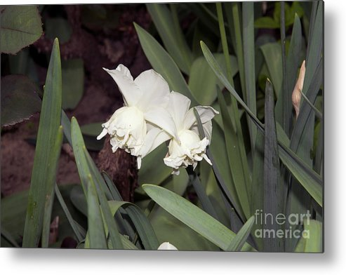 Flowers Metal Print featuring the photograph Spring Flowers by Elvira Ladocki
