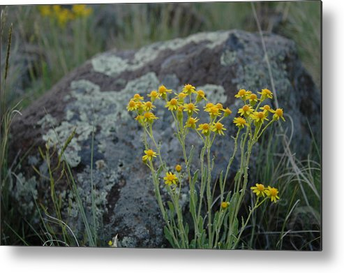 Flowers Metal Print featuring the photograph Untitled by Kathy Schumann