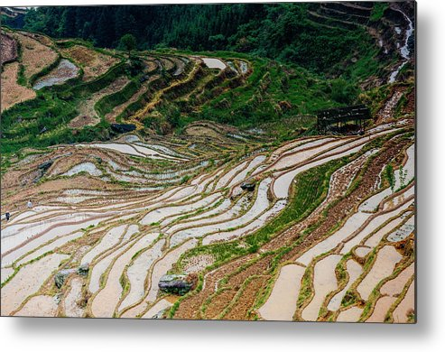 Terrace Metal Print featuring the photograph Longji Terraced Fields Scenery by Carl Ning
