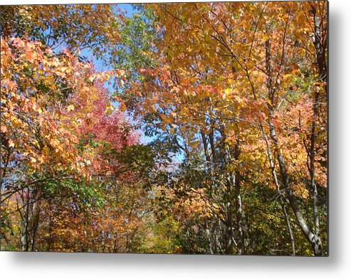 Landscape Metal Print featuring the photograph Autumn In Ma by Victoria Wang