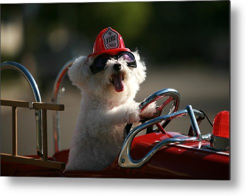 Michael Ledray Metal Print featuring the photograph Fifi To The Rescue by Michael Ledray