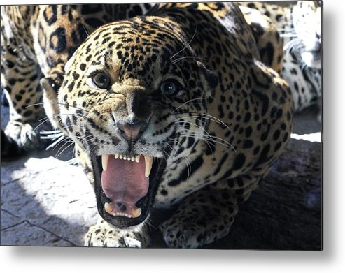 Leopard Metal Print featuring the digital art Leopard by Dorothy Binder