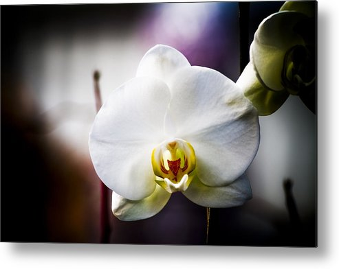 Floral Metal Print featuring the photograph Orchid by John Ater