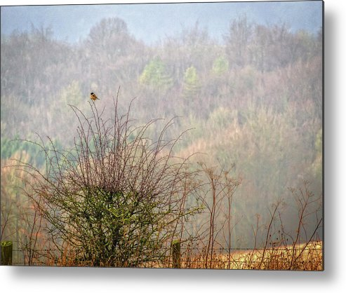 Eagle Metal Print featuring the photograph Waiting by Angela Aird