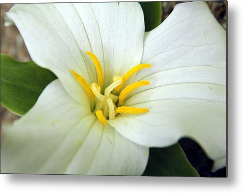White Metal Print featuring the photograph Untitled by Kathy Schumann
